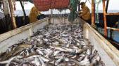 exportation poisson
