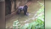 GorilleCover