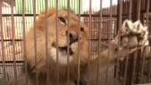 LionsSauvés