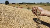 blé importé