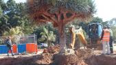 chantier destruction espaces verts