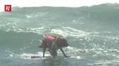 CHIENS SURF