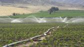 Projets agricoles dans la région de Laayoune-Sakiat al Hamra