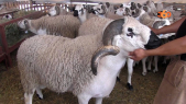 mouton cover