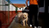 prison chiens portugal