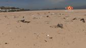 Cover Vidéo...  احجار وازبال تقضي على رمال شاطئ الدالية بالقصر الصغير