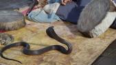 Serpent Jamaa el fna