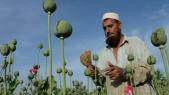 Pavot Talibans