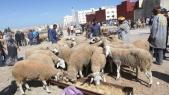 Moutons Aid Al Adha