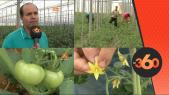 Cover Video -Le360.ma •نجاح مستثمر مغربي بفلاحة الطماطم بألميريا