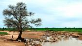 Mauritanie: sept villages dénoncent des expropriations au profit d'un officier de l'armée