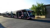bus rose