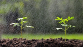 Pluies-agriculture