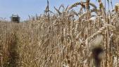 Céréales champ