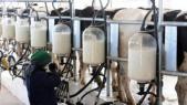 Filière laitière