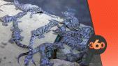 cover Video -Le360.ma •  ولادة 39 تمساحا جديدا بمنتزه التماسيح بأكادير