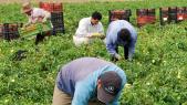Travailleurs agricoles France