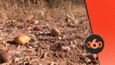cover Video - Le360.ma • الأركان الشجرة الأعجوبة المهددة بالانقراض بسوس