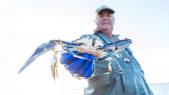 """Tunisie: le crabe """"Daesh"""" fait le bonheur des pêcheurs"""