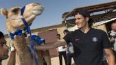 PSG Qatar dromadaires