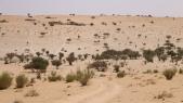 Sahel: 400 milliards de dollars pour contrer le changement climatique
