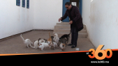 Cover_Vidéo: Le360.ma •خديجة مربية قطط كرست حياتها لتربية الحيوانات المتشردة
