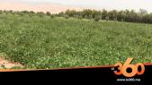 Cover_Vidéo: Le360.ma •روبورتاج: الفلاحة المعيشية بتارودانت تعيد شباب المدينة إلى القرى