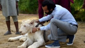 Lion animal de compagnie