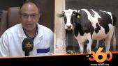 "Cover_Vidéo: Le360.ma •""أونسا"" تواصل عملية تلقيح مواشي سوس ضد الحمى القلاعية"