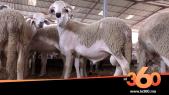 Cover Vidéo - تعرف على مميزات الأكباش من سلالتي الصردي والبركي