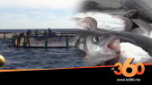 Cover. Vidéo.Investir dans l'aquaculture. Ep1 : Tout ce qu'il faut savoir sur la pisciculture