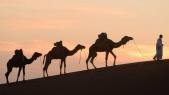 Chamelle au Maroc