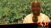 Vidéo. Mali. Riziculture: un projet pilote d'irrigation au goutte-à-goutte