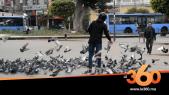 cover vidéo :Le360.ma • في زمن كورونا.. شاب يتطوع لإطعام الحيوانات بشوراع الدار البيضاء