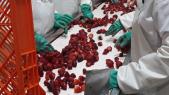 Usine fraise