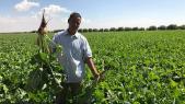 Agriculture Maroc
