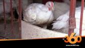 Cover_Vidéo:لهذا ارتفعت أسعار الدجاج في الأيام الأخيرة