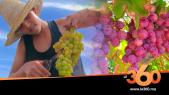 Cover Vidéo - رغم جائحة كوفيد 19 محصول العنب بنسليمان وبوزنيقة لم يتأثر