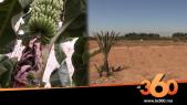 Cover_Vidéo: قطع الماء على معقل الحوامض بسوس يعصف بالقطاع الفلاحي