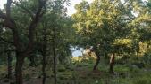 Forêt de Rmilat