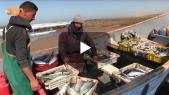 Cover_Vidéo: جولة بقرية الصيادين سيدي بولفضايل باشتوكة