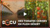 Cover_Vidéo: Docu360: Des tomates cerises en plein désert