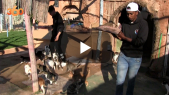 cover  قلوب رحيمة تنتشل القطط من شوارع أكادير