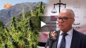Cover_Vidéo: مضيان صاحب اقتراح تقنين زراعة القنب الهندي يشرح الوضعية
