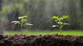 Agriculture Pluie