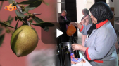 Cover_Vidéo: ترحيب واسع بسوس باعتماد الأمم المتحدة يوما عالميا لشجرة الأركان