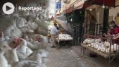 Cover_Vidéo: ارتفاع ثمن المواد الأولية يرفع أثمنة الدواجن بالمغرب