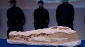 Paléontologie - Maroc - Préhistoire - Fouilles - Musée de Marseille - Restitution