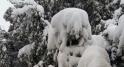 Ifrane-neige-3
