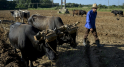 Cuba privée d'essence